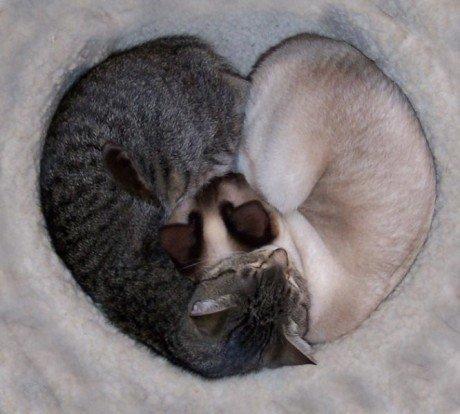 Фото любящих и влюбленных всегда позитивны — кошек это тоже ...   414x460