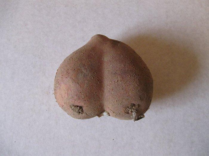 Смотрит как фото яйца мужского порно