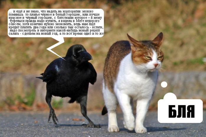 http://img1.liveinternet.ru/images/attach/c/0//53/33/53033635_cat_c.jpg