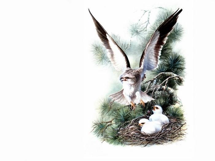Несколько картинок с птицами