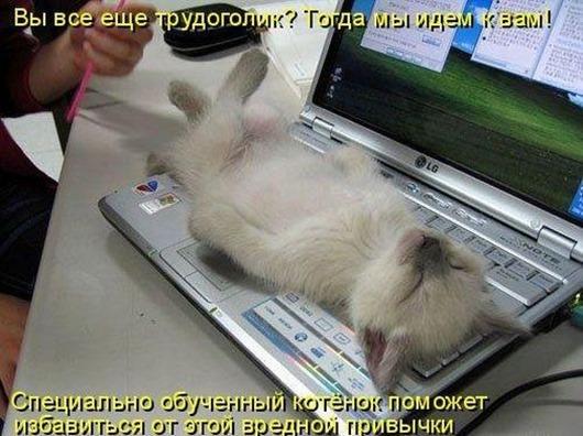 1401201429_1 (530x396, 73Kb)