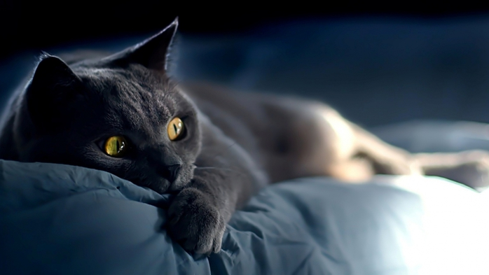 кошки ночь стихи
