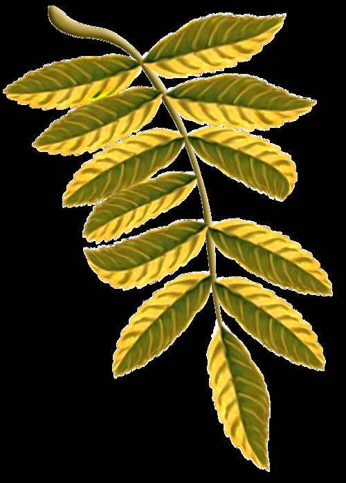 листья рябины в картинках проблема