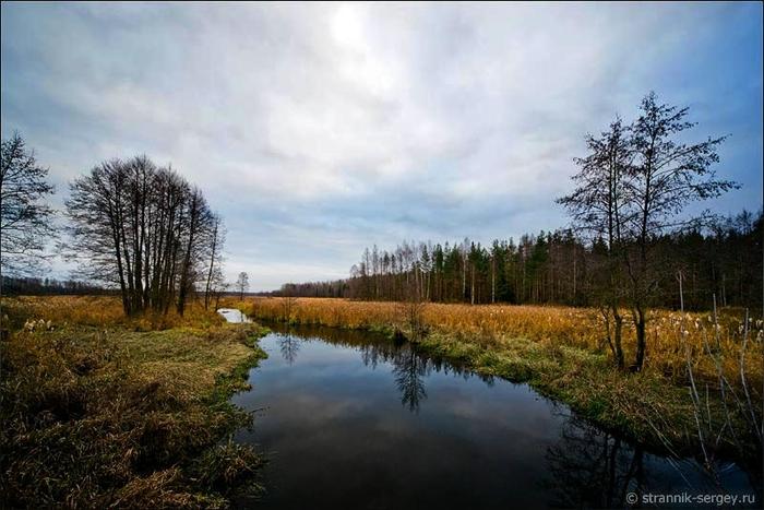 Поздняя осень, ноябрь: деревья в лесу. Обсуждение на ...