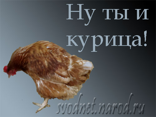 Смешные картинки куриц с надписями, насыщенных