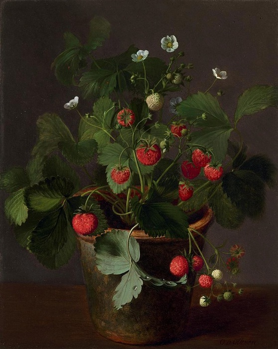 Clara-von-Sivers-oil-painting-flower-still-life-painting-german-painters-19c (1)[1] (558x700, 121Kb)