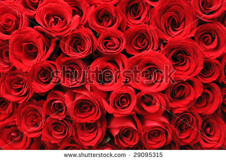 stock-photo-background-of-beautiful-red-rose-29095315 (450x319, 197Kb)