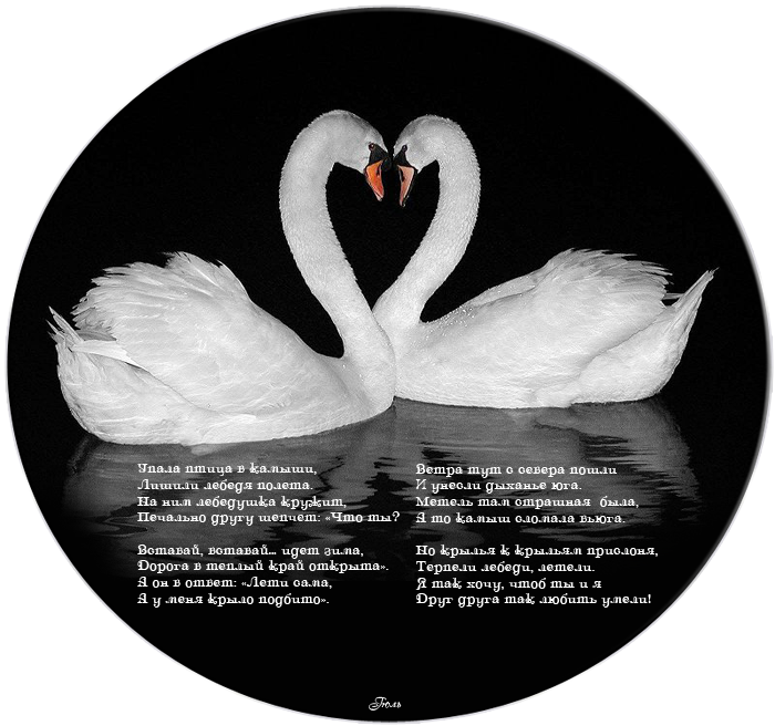 Поздравление на свадьбу как два лебедя