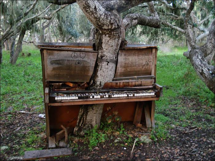 Картинки по запросу фортепиано в лесу картинки