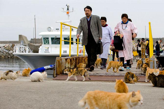 http://img1.liveinternet.ru/images/attach/c/0/120/944/120944351_koshachiy_ostrov_Aoshima_2.jpg