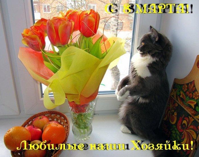 Красивые, с 8 марта открытки с кошкой