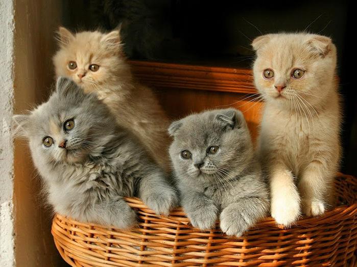 исключаем, картинки с четырьмя котятами последний год алексий
