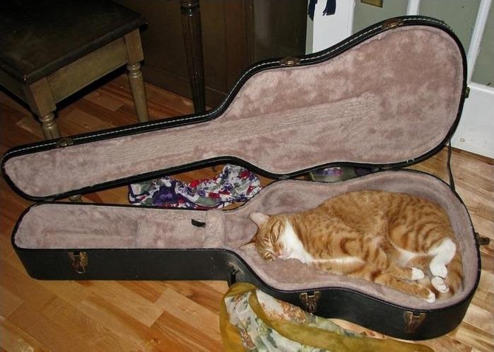 sleepingcats05 (700x498, 327Kb)