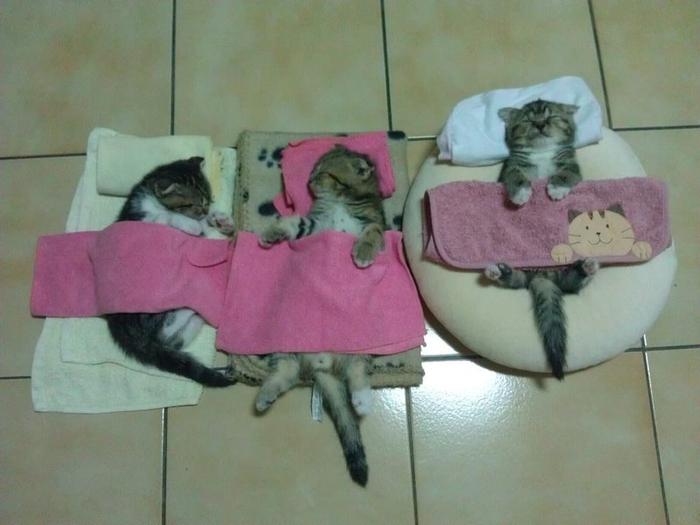 sleepingcats11 (700x525, 300Kb)