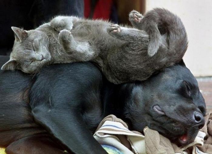 sleepingcats20 (700x506, 288Kb)