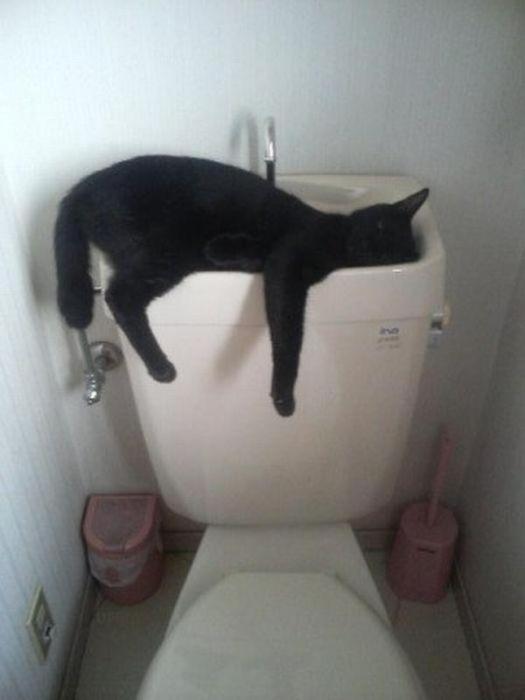 sleepingcats29 (525x700, 174Kb)