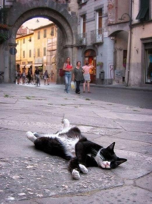 sleepingcats31 (522x700, 356Kb)
