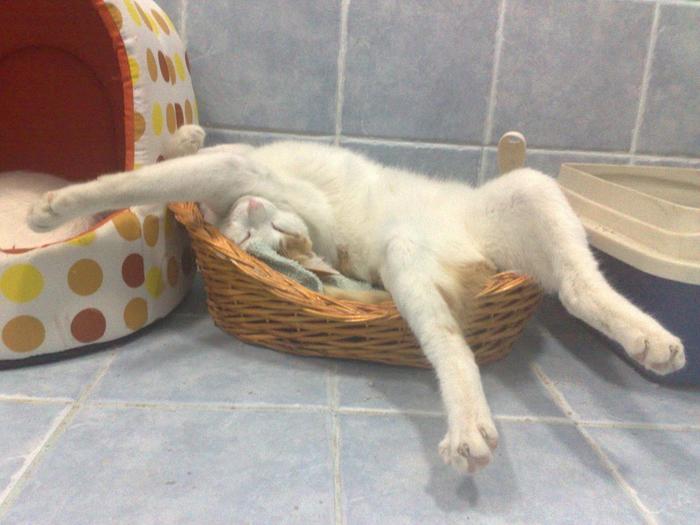 sleepingcats34 (700x525, 379Kb)