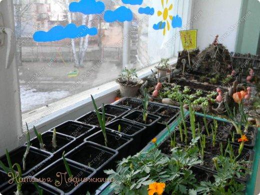 Наталья Подножкина-огород-на подоконнике-муравьишка3 (520x390, 215Kb)