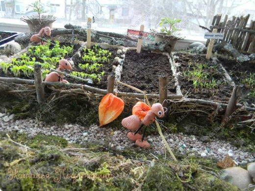 Наталья Подножкина-огород-на подоконнике-муравьишка7 (520x390, 246Kb)