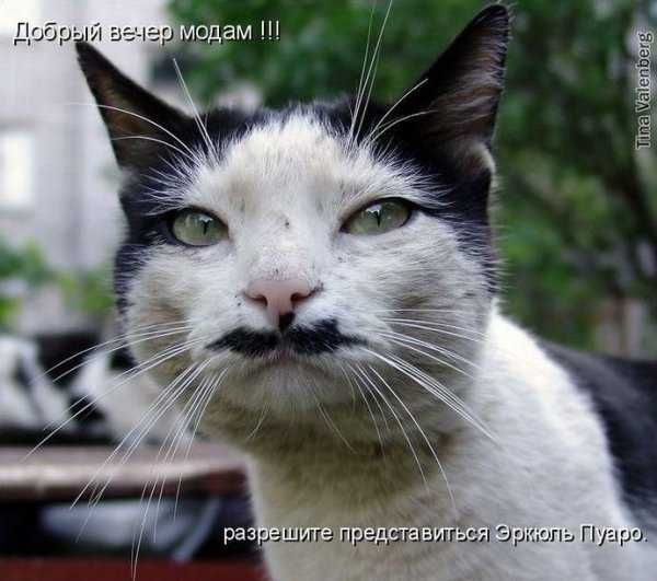 http://img1.liveinternet.ru/images/attach/c/0/34/482/34482727_1225355355_img_18190871_209_5.jpg