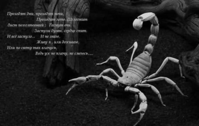 Скорпион мой картинки с надписями