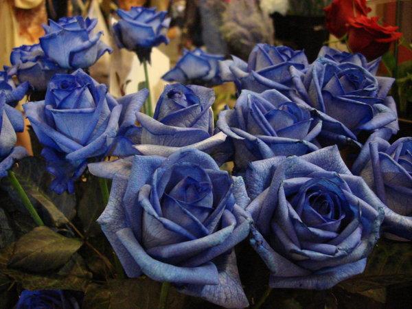 Как сделать цветы синими фото 441