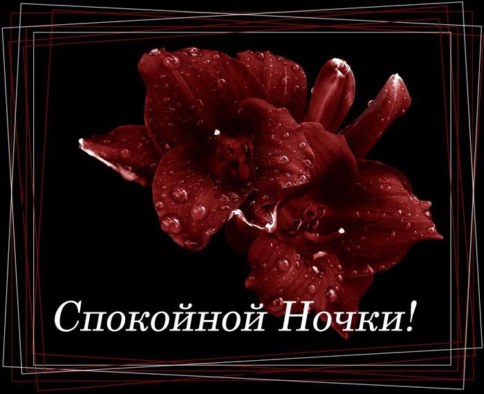 Днем, красивые открытки любимой спокойной ночи с цветами