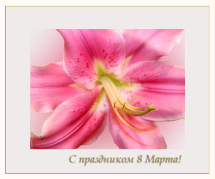 Фото вдв, открытки лилии 8 марта