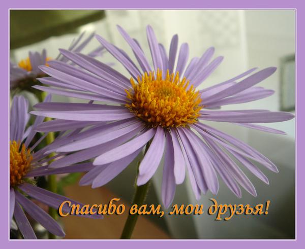 Картинка спасибо друзьям за поддержку, картинки марта