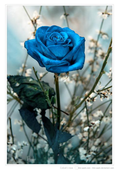 Ссылка на Синие розы для отправки друзьям по ICQ.