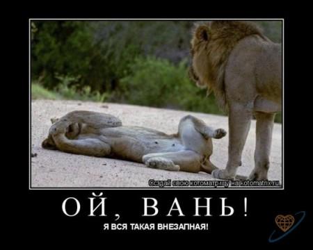 Львыи к сексу спокойны