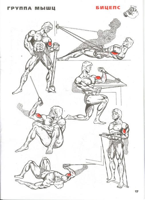 полные курсы прокачки мышц в картинках бизнес портреты, лассическое