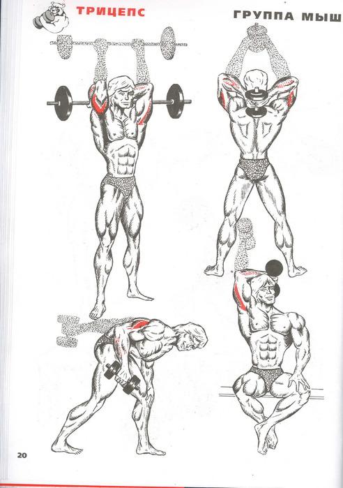 упражнения с картинками мышц фото ниже можете