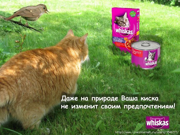 https://img1.liveinternet.ru/images/attach/c/0/52/513/52513398_Viskas_kopiya.jpg