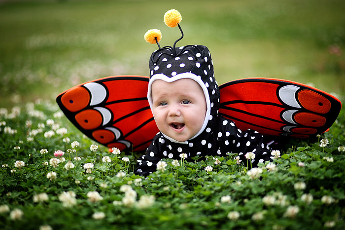Смешные картинки про бабочек