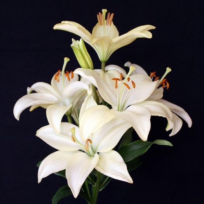 фотографию душой фото цветов лилия значение ученых согласны