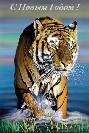 год тигра под знаком водолея