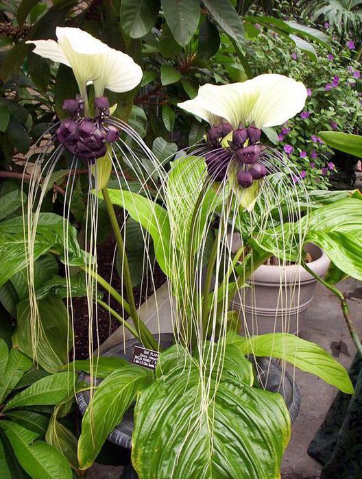 Экзотические цветы и растения купить, цветы июня в букетов названия и фото