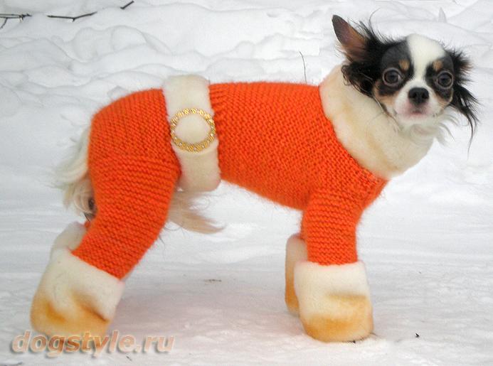 одежда для собак записи в рубрике одежда для собак дневник н н