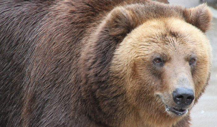 Андрей Шалыгин - Московский зоопарк