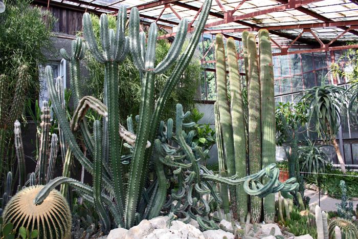 ялта ботанический сад