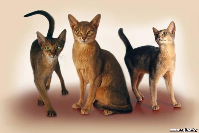 кошки породы разные фото