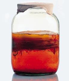 Чайный квас - популярный напиток, получаемый с помощью чайного гриба.
