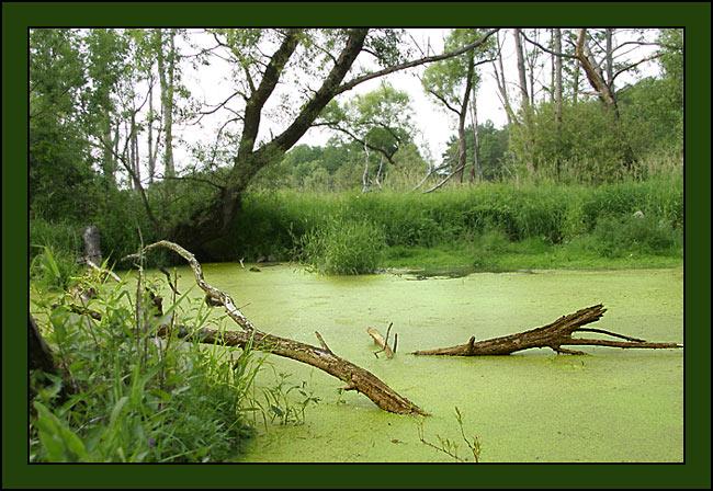 Обманчивое болото - Раздел природа - Фотография на фотосайте.