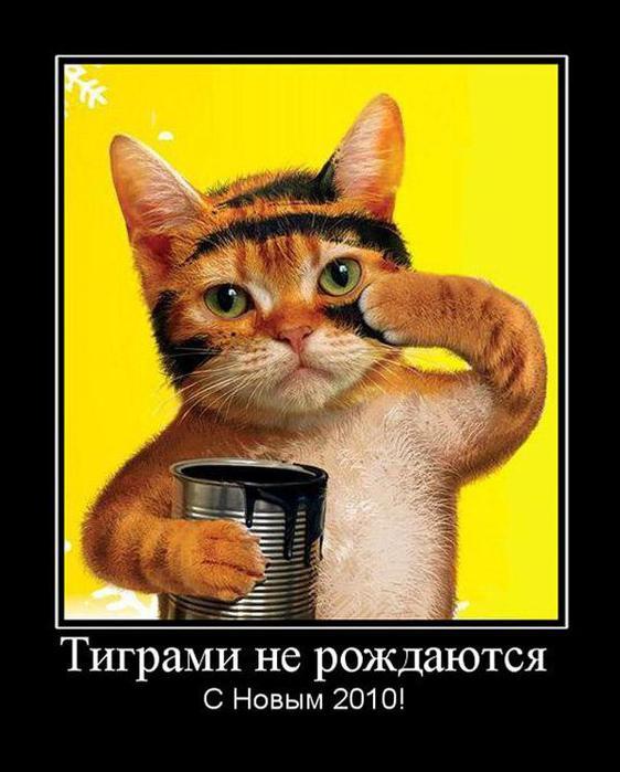 """3.  """"Тиграми не рождаются. следующее фото.  1. Ссылка на картинку."""