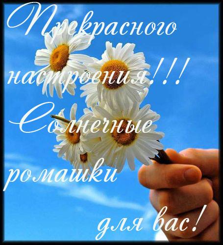 http://img1.liveinternet.ru/images/attach/c/1/57/753/57753003_romashki.jpg