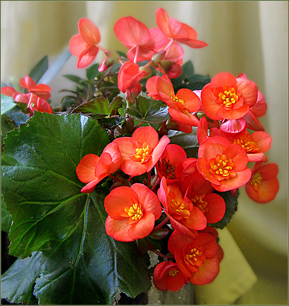 Каталог цветок живых