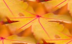 Осень Гадание по осенним листям via Nastra LJ Интересное: Групповой...