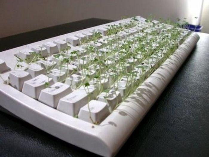 Картинки клавиатуры смешные, девочкам марта